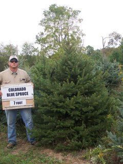 Colorado Blue Spruce 5
