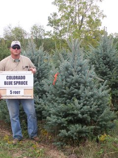 Colorado Blue Spruce 7