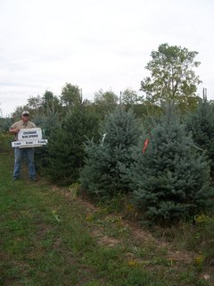 Colorado Blue Spruce 9